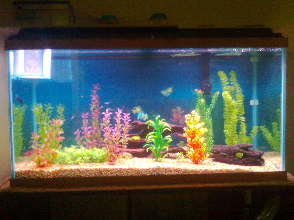 Starting a River: A Beginner's Guide to Freshwater Aquariums | The Colegio Blogporter 10 Gallon Fish Tank Ideas