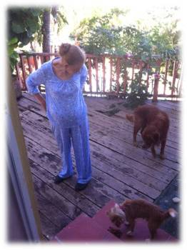 "Looking for that last picture, we find Aida Toro feeding the house dogs with her blue pajamas once again. From a strict woman to a little girl, that's how her daughter describes it. ""I'm telling Zeus to let Picasso eat, but he doesn't understand me, you tell him so I can go change""."